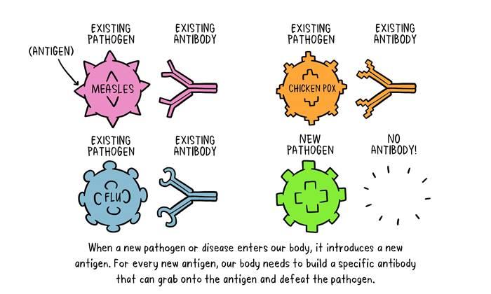 vaksin-dan-cara-kerjanya-di-dalam-tubuh-lingzhi-japan-img-who