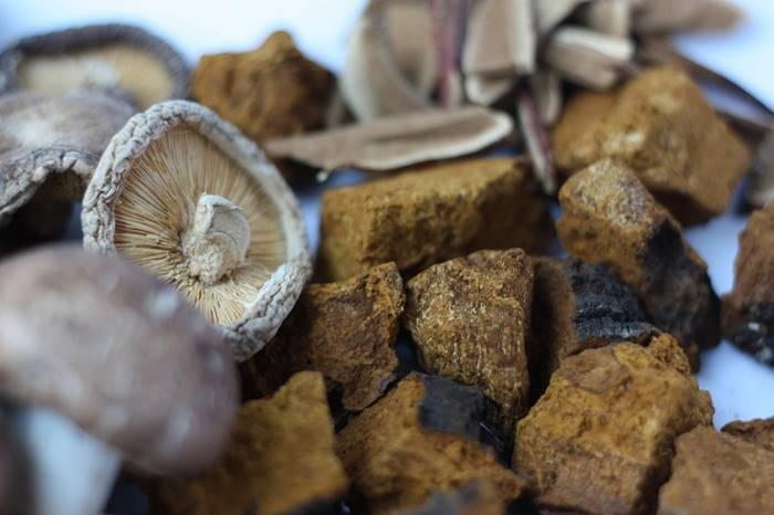 6-jamur-obat-yang-bertindak-sebagai-imunomodulator-lingzhi-japan